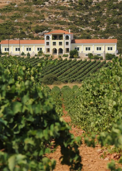nicolas-repanis-winery-04