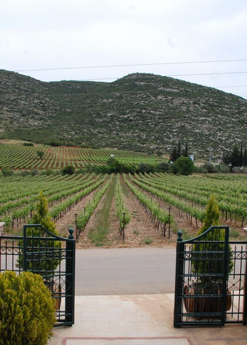 nicolas-repanis-winery-11